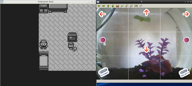 A Fish is Playing Pokemon on Twitch